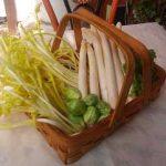 フランス産ホワイトアスパラガス